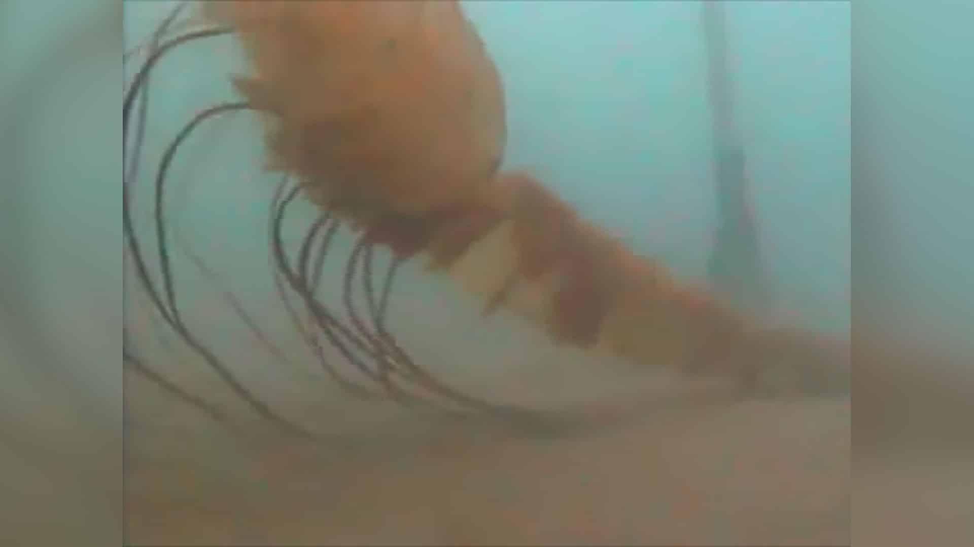 Misterioso ser captado por la cámara en las profundidades marinas