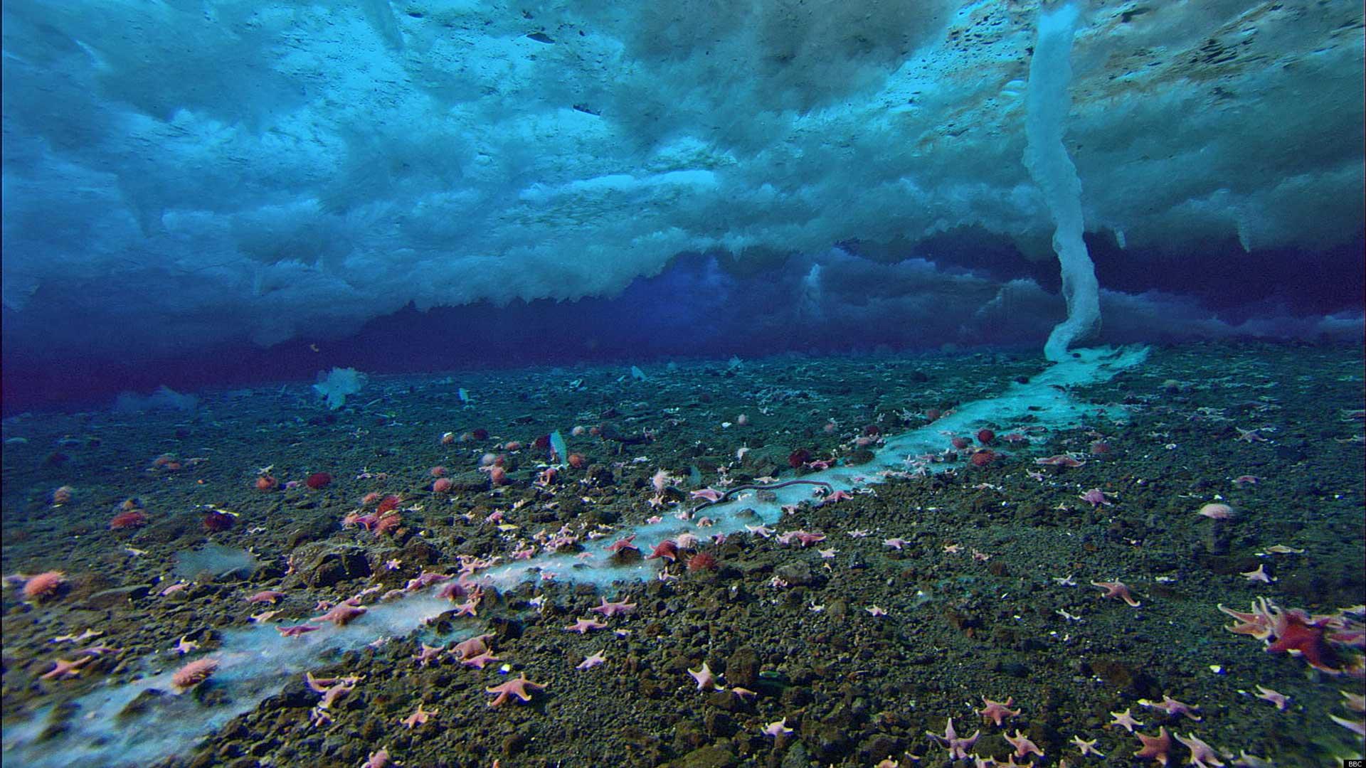Científicos confirman. Había vida en la Tierra hace 3.500 millones de años