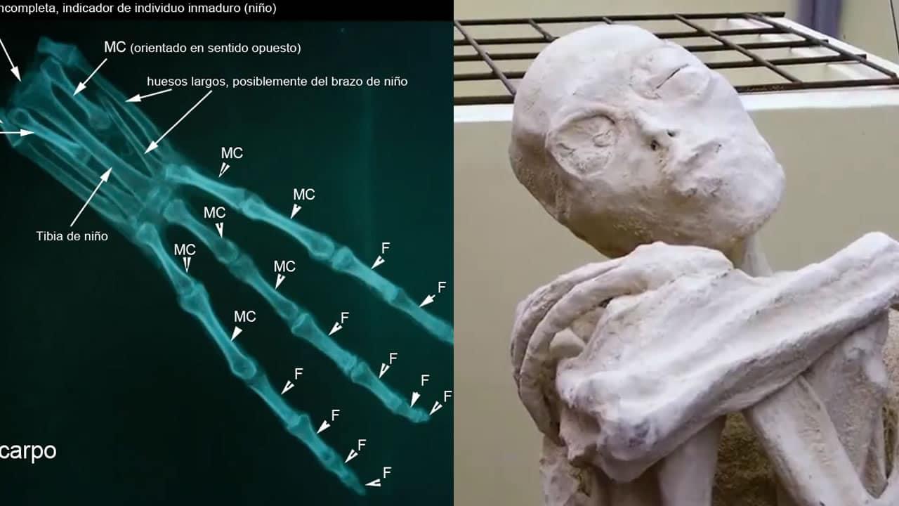 Última Hora – Las momias «aliens» de Nazca resultan ser una burda falsificación ahora destapada