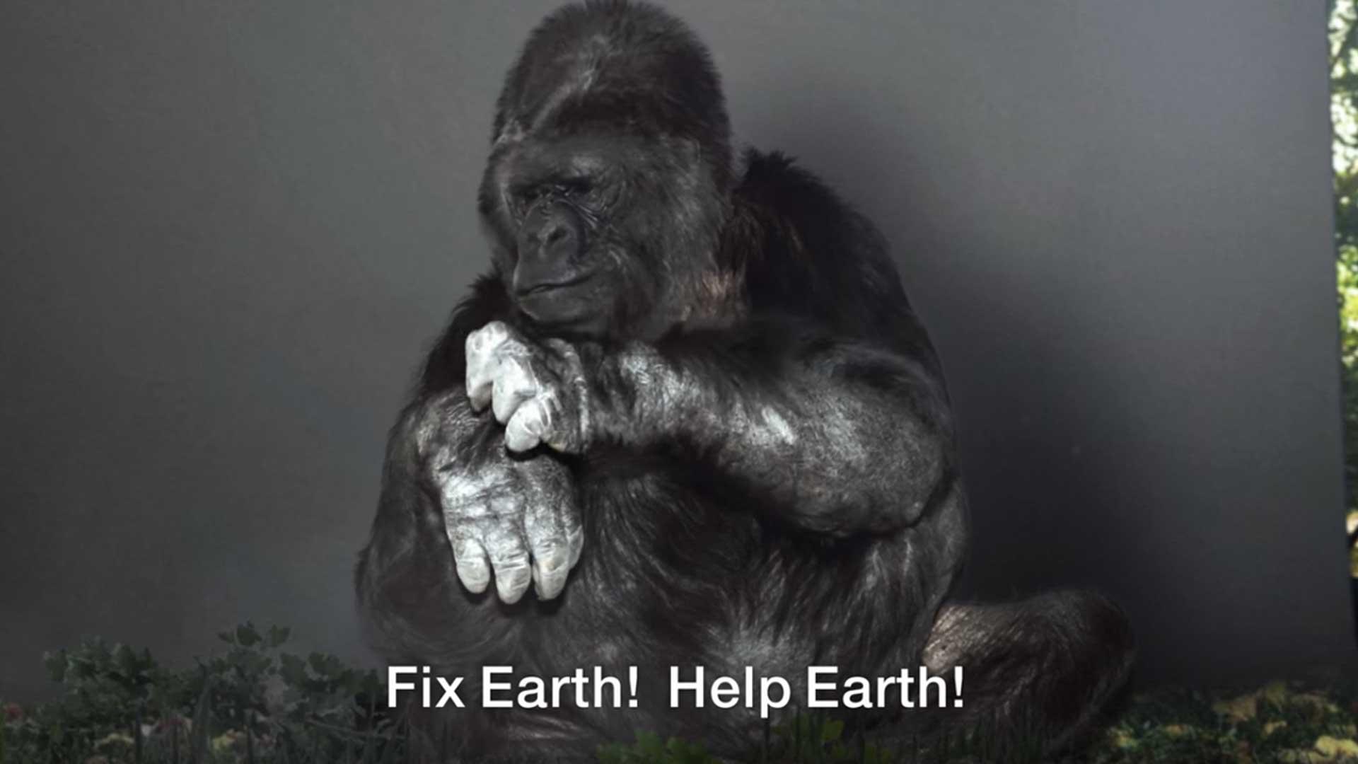 El impactante mensaje de Koko la gorila para la humanidad
