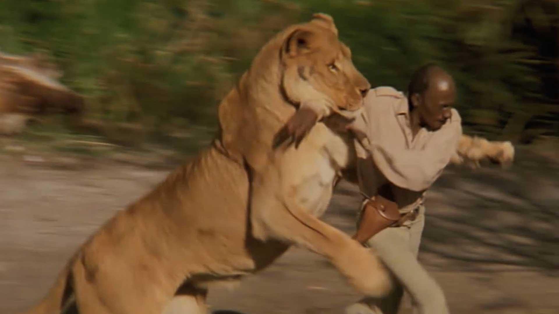 Líder Religioso invoca a Dios para enfrentarse con los leones, pero este no apareció…