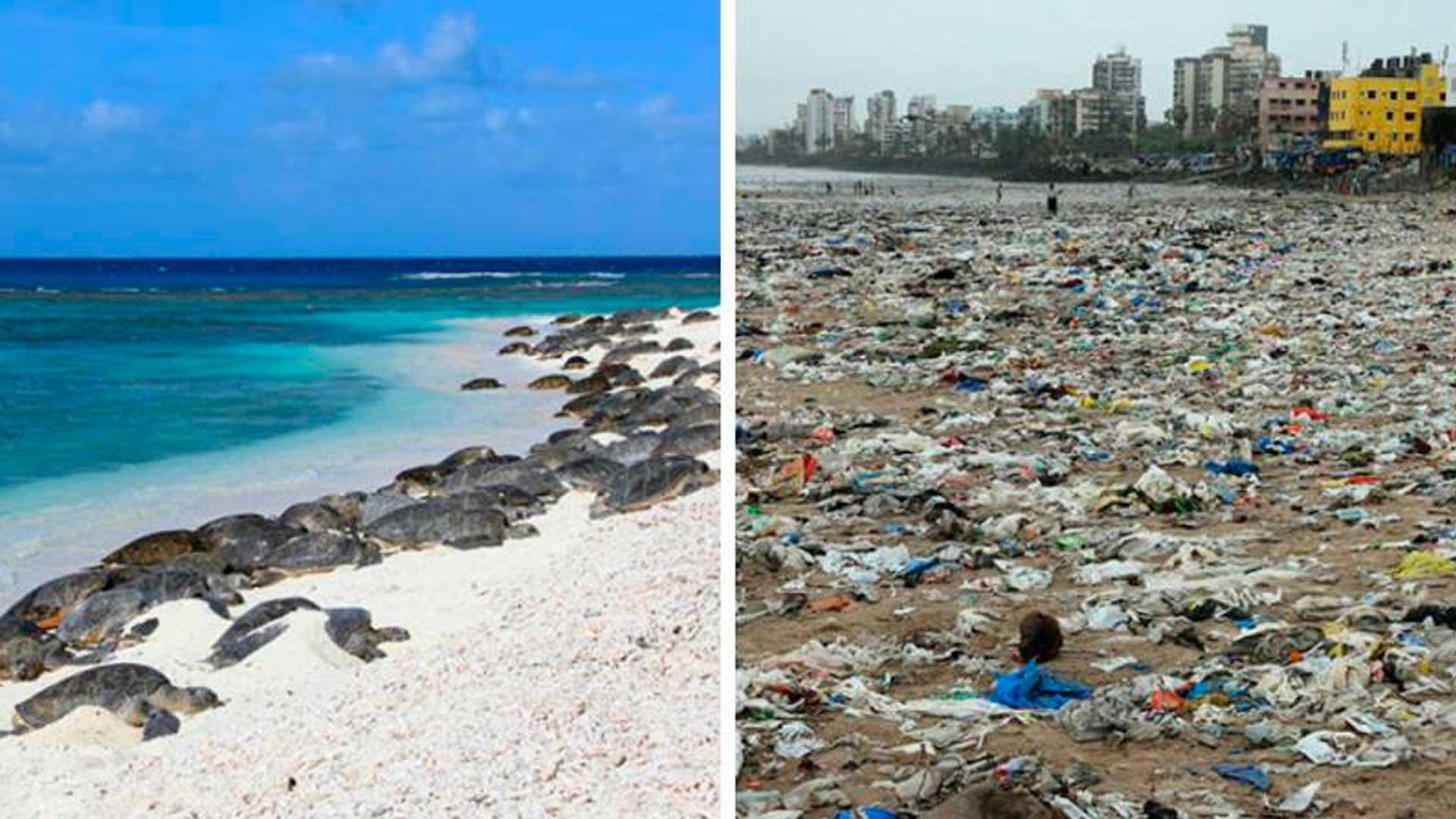 Por primera vez en 20 años, las tortugas regresan a Indian Beach después de una gran limpieza