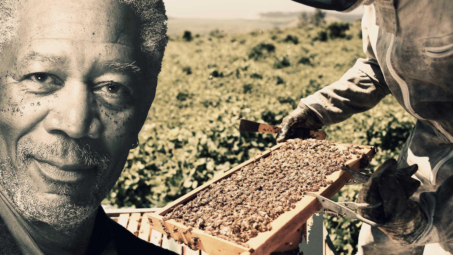La aportación de Morgan Freeman para salvar la naturaleza con su increíble santuario de abejas