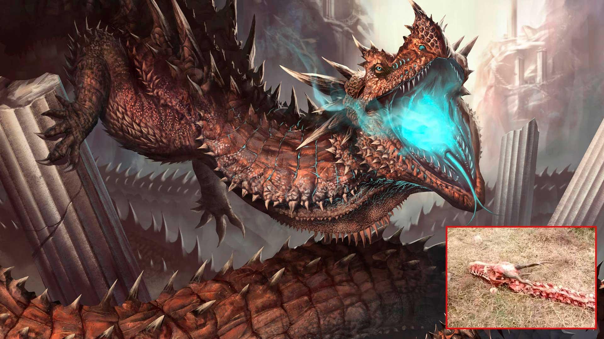 Esqueleto de dragón de 18 metros descubierto en China, ¿real o fake?