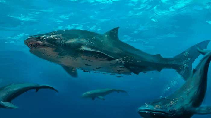 Pescador encuentra cabeza de tiburón gigante mordida por criatura aún más grande