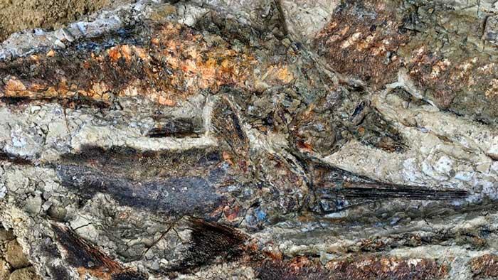 Hallan un cementerio de dinosaurios en Dakota del Norte del momento del impacto de asteroide