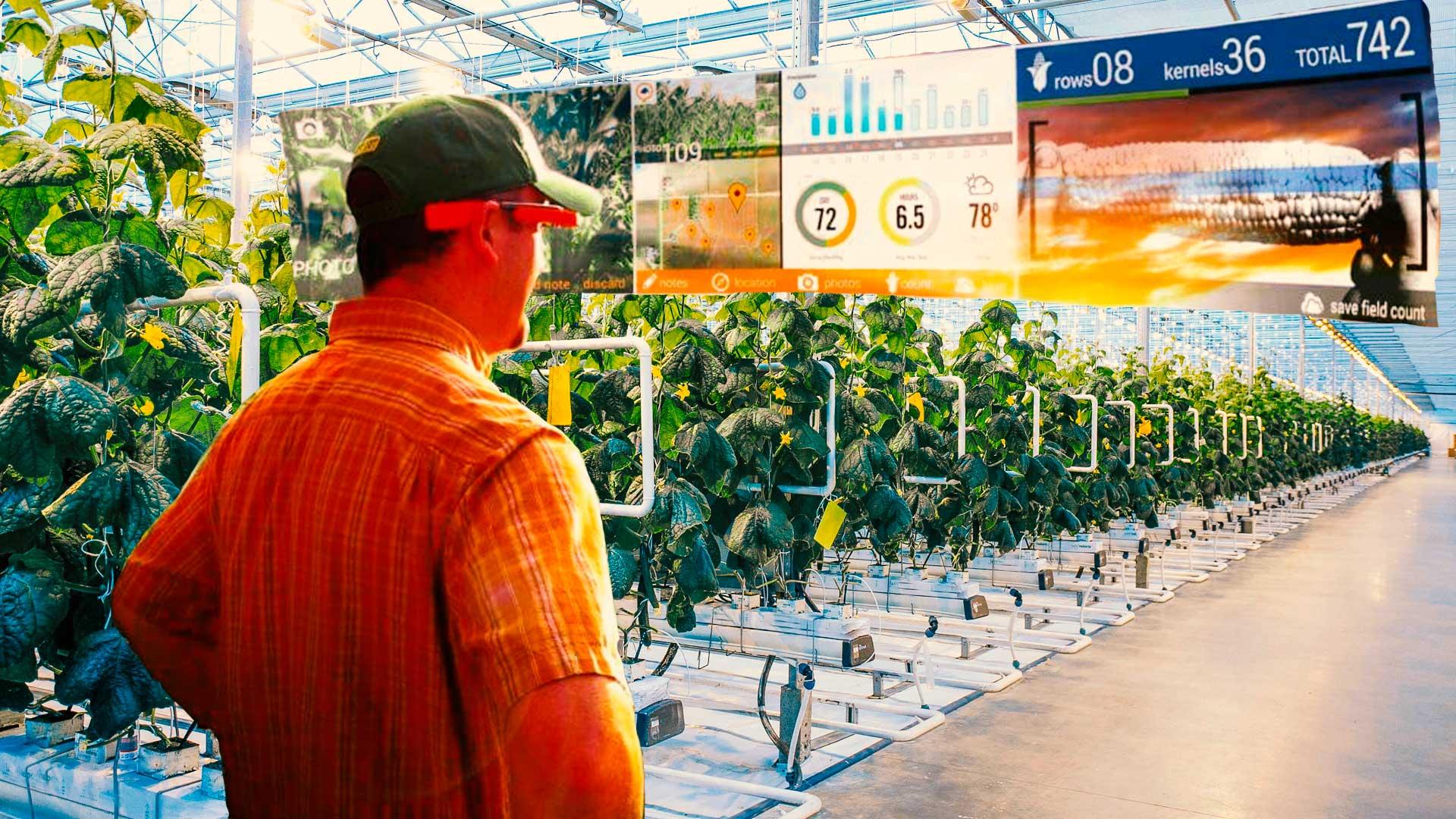 La revolución Indoor: sin pesticidas, 95% menos de agua y 100 veces más productivas