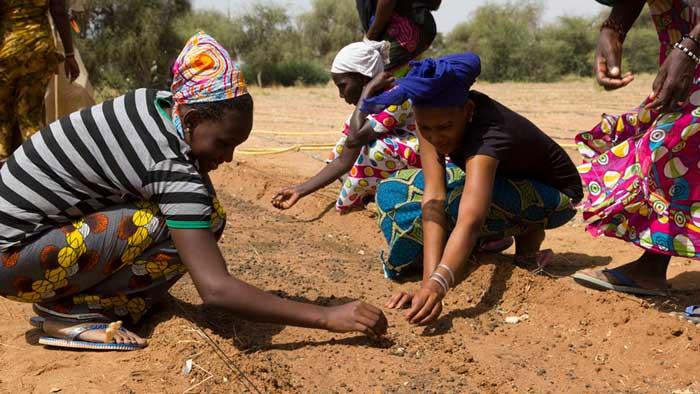 """Docenas de países se unen para crear """"La Gran Muralla Verde"""" en África"""