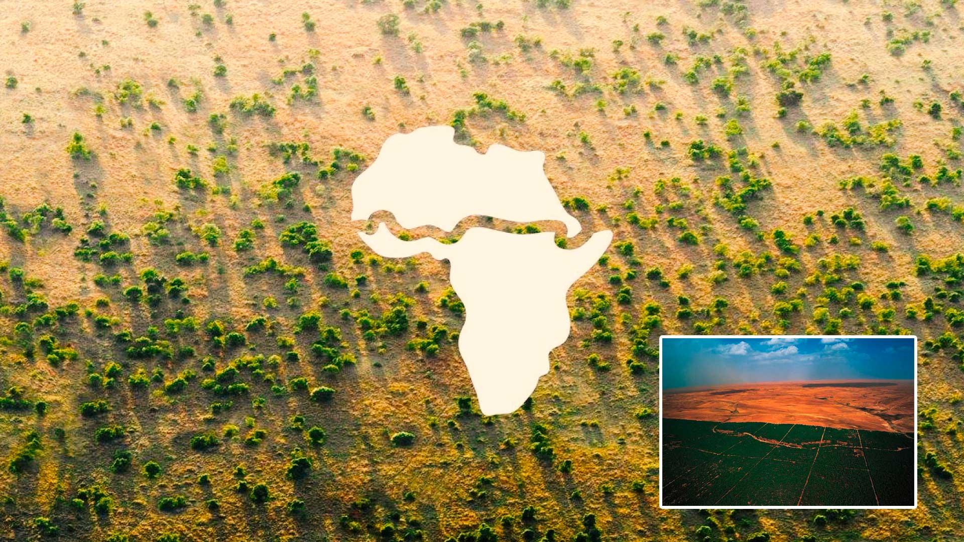 Docenas de países se unen para crear «La Gran Muralla Verde» en África