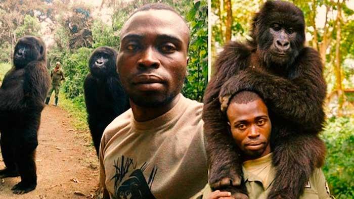 La historia de los gorilas y la pose que han hecho el mejor selfie del mundo