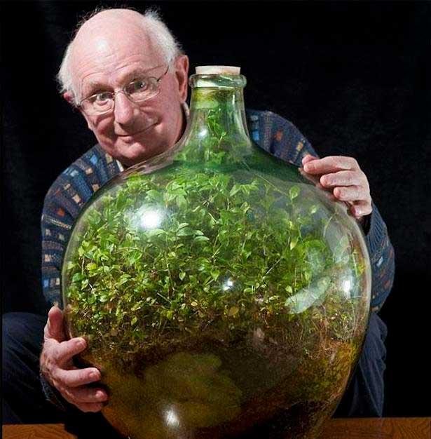 Esta planta sigue creciendo dentro de esta botella después de más de 40 años sin regarse