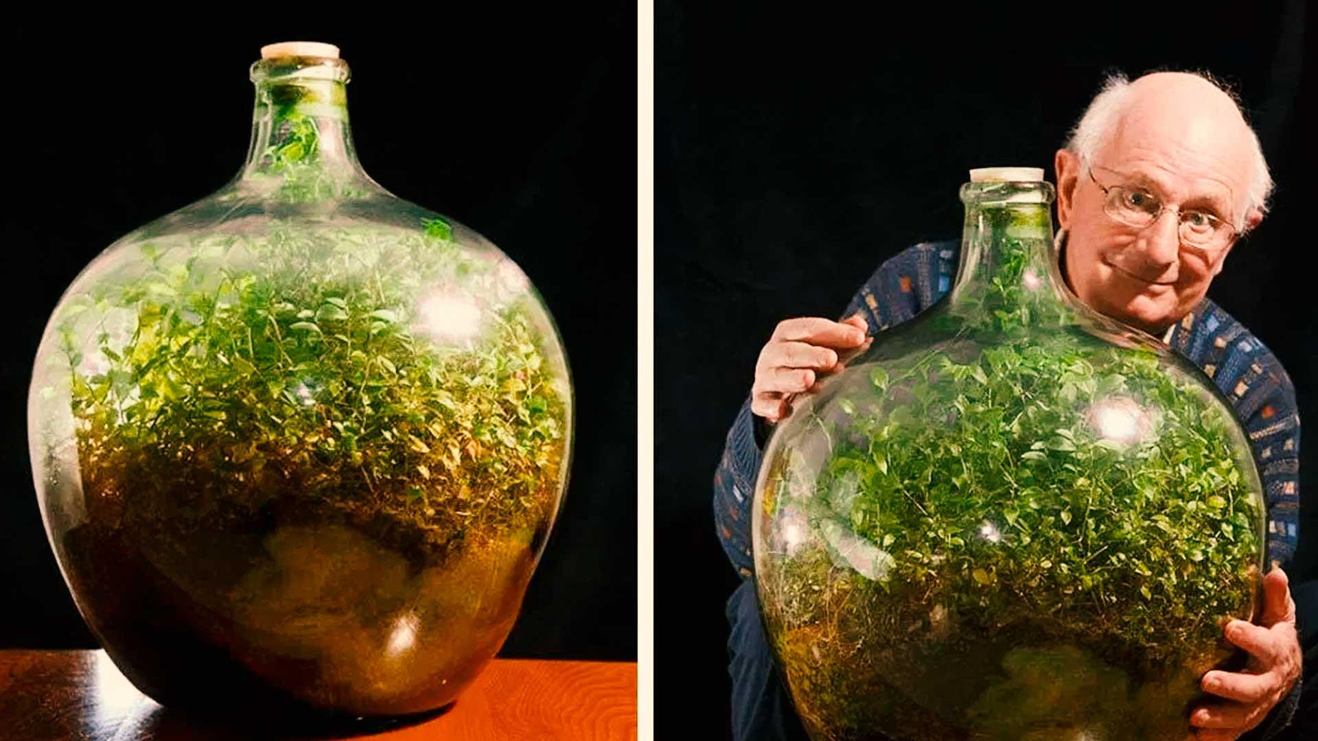 Esta planta sigue creciendo dentro de una botella sin regarse después de más de 40 años
