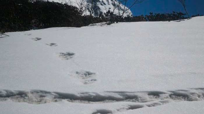 Ejército indio hace público el hallazgo de las primeras huellas de Yeti