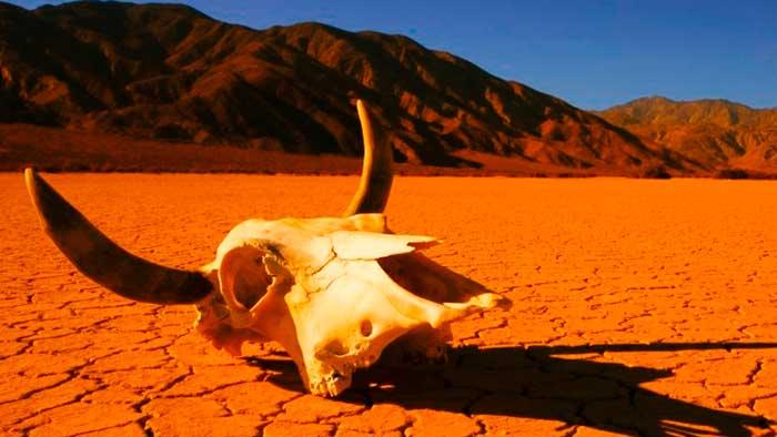 Calculan que el colapso climático llegará en 2030 y con ello la extinción de un millón de especies