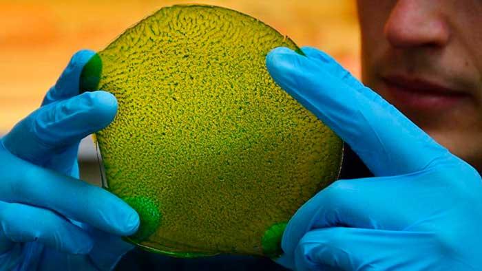 Fotosíntesis Artificial: La primera hoja biosolar del mundo hace el trabajo de 100 árboles