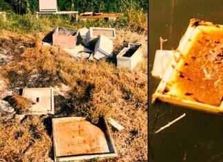Medio millón de abejas desaparecen en Texas EE.UU. por culpa de los vándalos