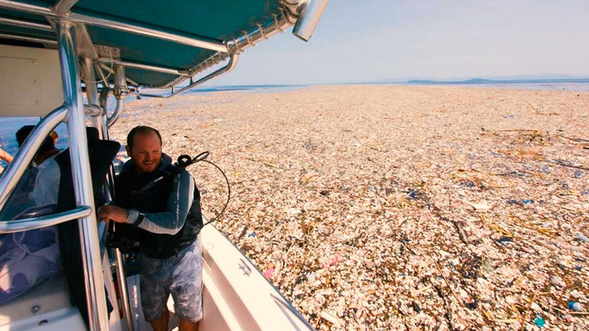 Más de una milla cuadrada de plástico en el Caribe asfixia la vida silvestre, ¿cómo hemos llegado a esto?