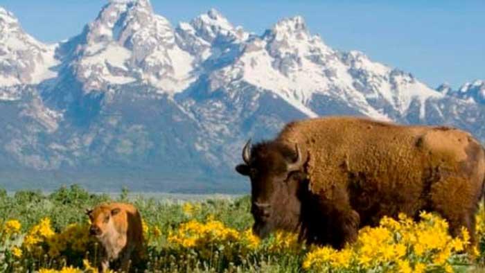 Millonario de Wyoming quiere comprar el 15% del planeta para proteger su naturaleza