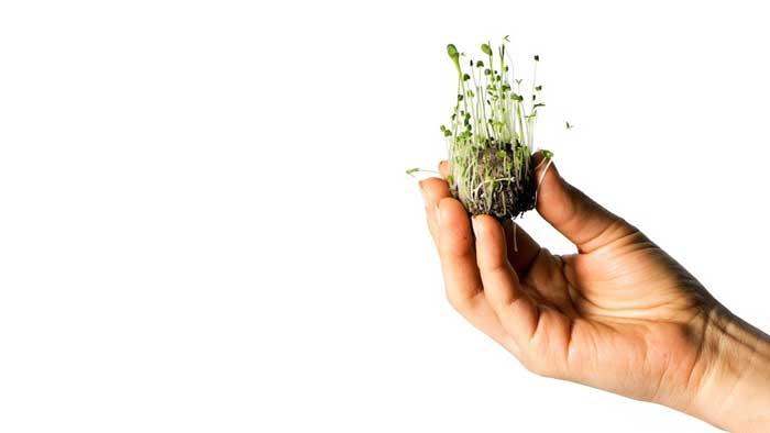 Bombas de semillas, el último invento para reforestar el planeta