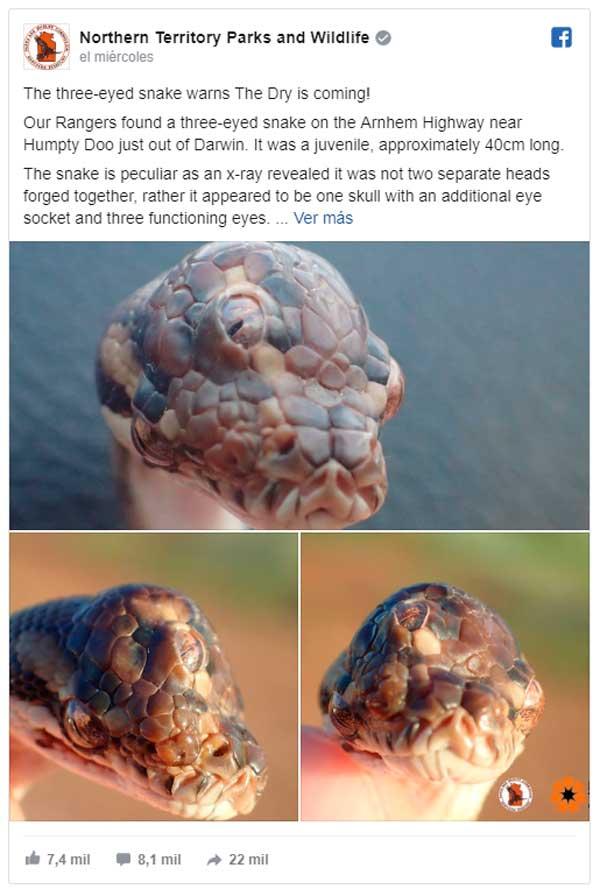 Una serpiente con tres ojos es hallada en Australia