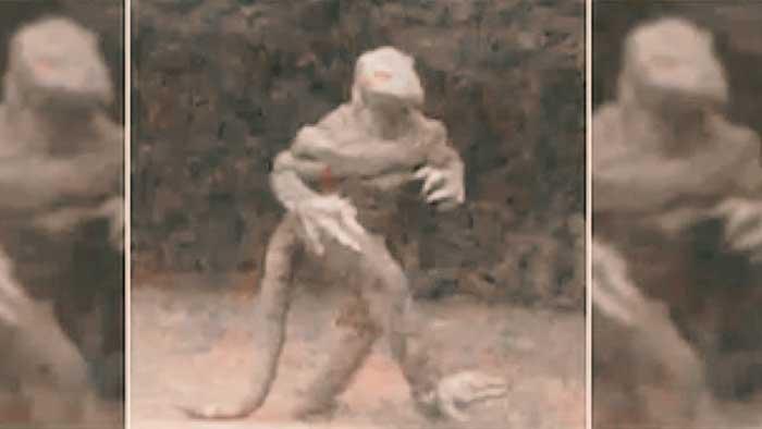 ¿Sabrías identificar a un reptiliano camuflado entre nosotros?