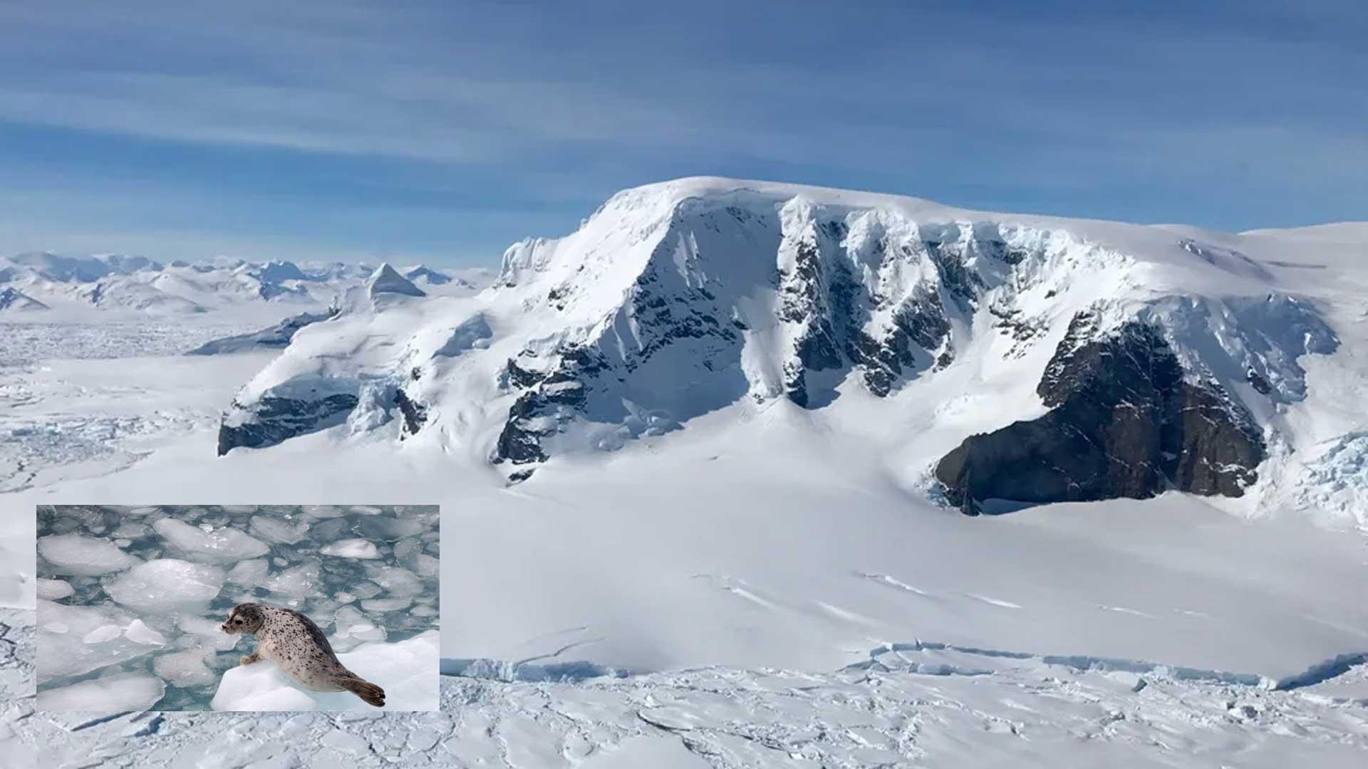 Calentamiento súbito de la Antártida: Estos son los datos