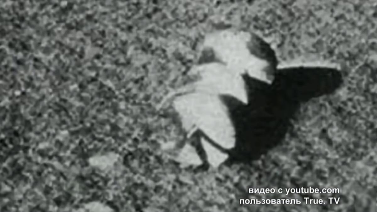 Explorando un extraño satélite: feroces discusiones de científicos soviéticos sobre el propósito de la luna 7