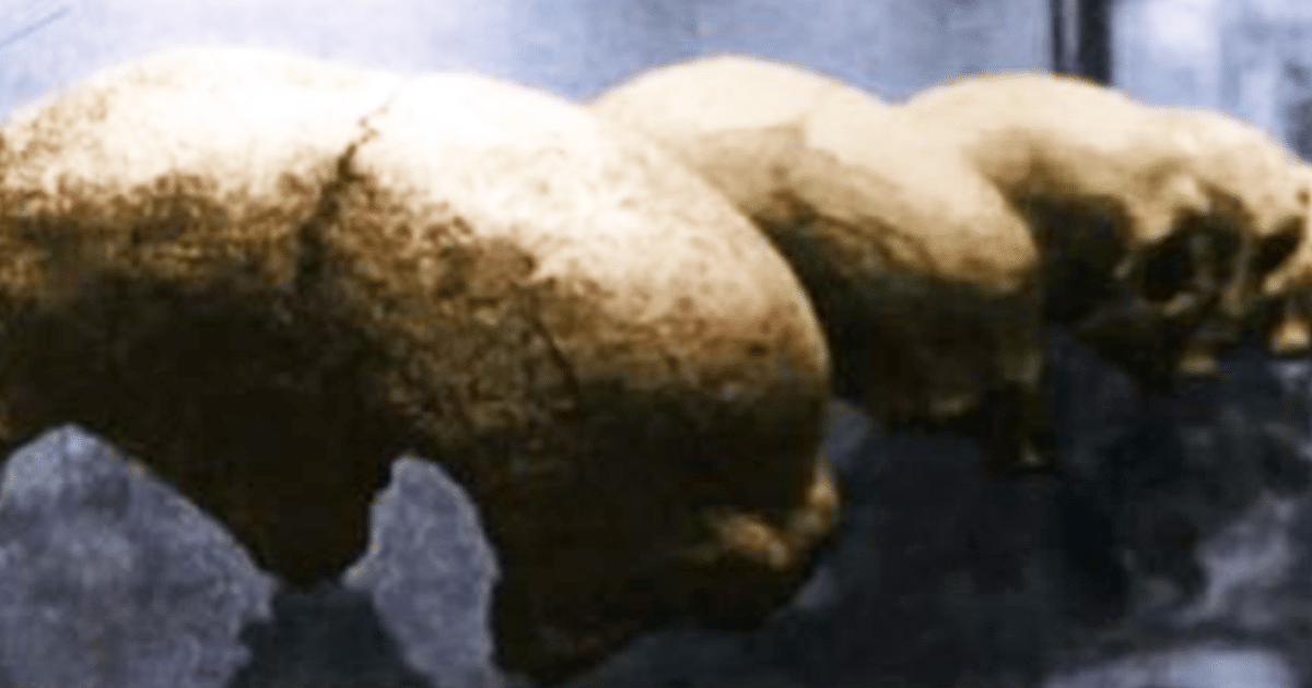 Cuerpos extraterrestres descubiertos en un sitio arqueológico en Malta – Cubiertos en la arena durante más de 100 años