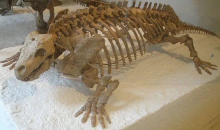 En los Estados Unidos, una roca se derrumbó y reveló rastros de animales misteriosos de la antigüedad 4
