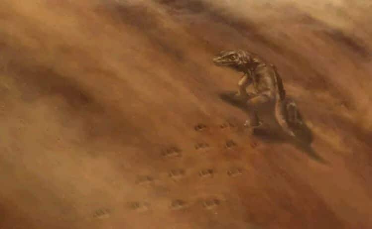 En los Estados Unidos, una roca se derrumbó y reveló rastros de animales misteriosos de la antigüedad.
