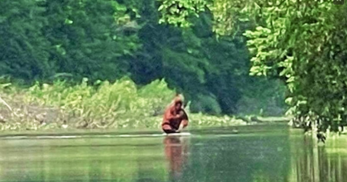 Un residente de Michigan logró filmar lo que parece ser «Bigfoot» llevando a un cachorro al otro lado del río.